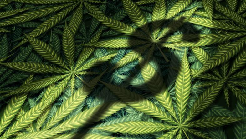 U.S. House Set to Vote on Cannabis This Week